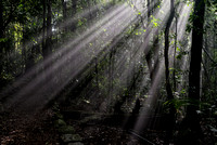 Sun shining through mist, Border Track, Lamington National Park