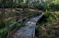 Polblue Swamp, Barrington Tops National Park