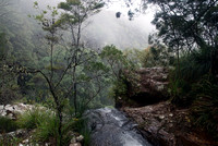 Above Twin Falls, Springbrook