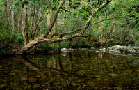 Gloucester River, Barrington Tops National Park