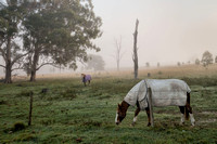 Horse in mist near Mt Barney