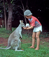 Mark feeding Kangaroo at Cooberrie Park, Yeppoon