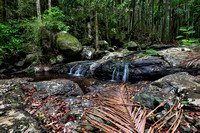 Cedar Creek, Tamborine National Park