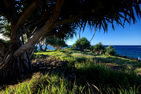 Pandanus Trees, Fingal Head