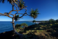 Pandanus Palms, Fingal Head