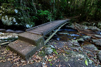 Bridge, Springbrook National Park