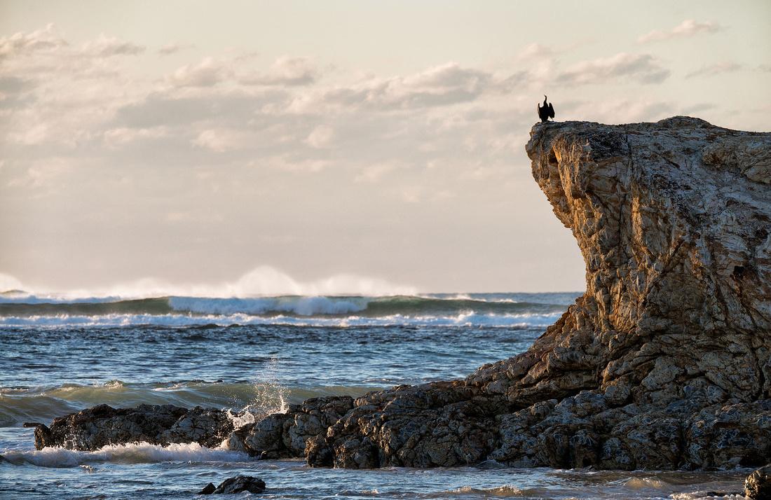 Cormorant on rocks near Illaroo campground