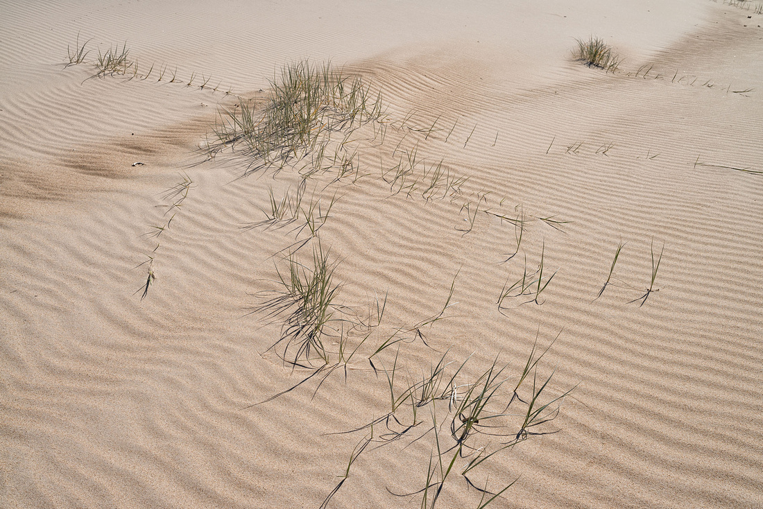 Sand Dunes on Wooli Beach
