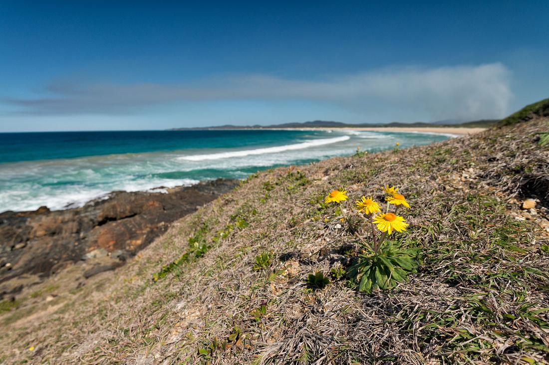 Wooli Beach from Wilsons Headland