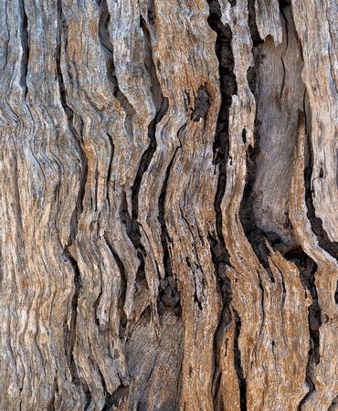 Dead Tree Patterns, Lake Broadwater