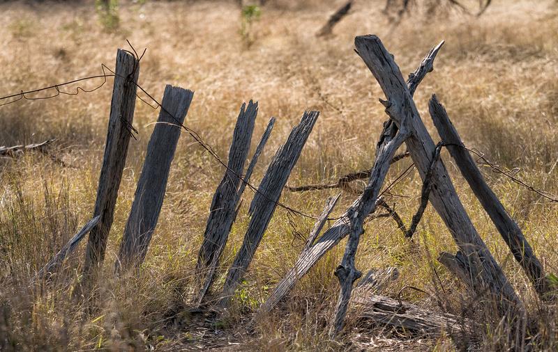 Old Fence, Lake Broadwater