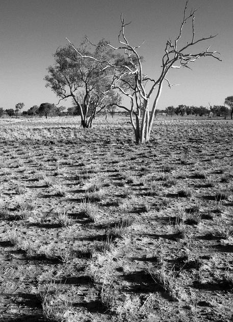 Mitchell Grass Plain, Bladensberg National Park, Winton