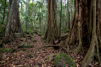 Trees, Tamborine National Park, Joalah Section