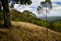 01 Bunya Mountains